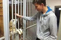 Sbírka Psí tlapka pomůže opuštěným zvířatům v útulcích v Zábřehu a Mohelnici. Lidé mohou přispívat do 4. listopadu.