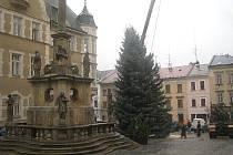 Problémy s parkováním se na čas zhorší, část plocha u radnice zabral vánoční strom