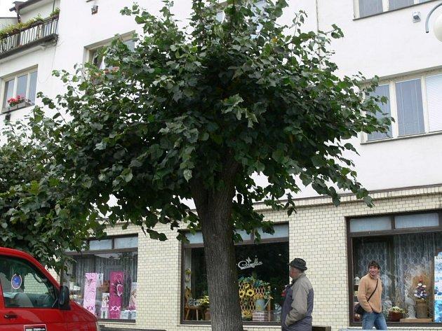 Do Vánoc má zmizet 18 stromů z aleje na náměstí v Lošticích, na jaře pak zbytek z nich.