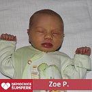 Zoe Prokopová 1. 3. 2018 Cotkytle