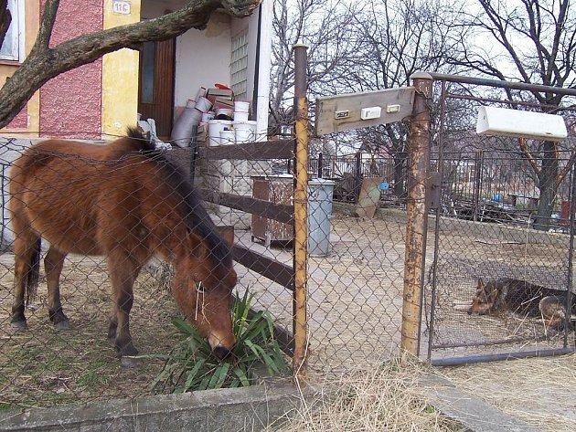 Dům veterinářky v Javorníku, u něhož našli uhynulé koně.