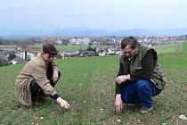 Předseda Agrodružstva Zábřeh Bohuslav Steidl a hlavní agronom Jan Pašta kontrolují porost na zatravněném poli na vrchu Klárinka