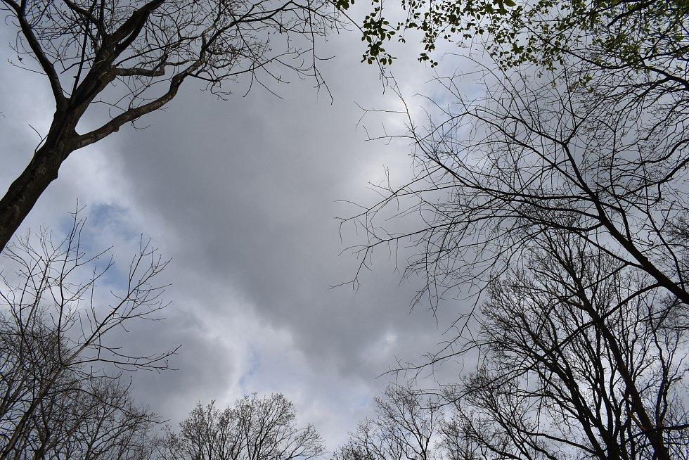 Místo v remízku u Krnova, kde stával mohutný dub. Mezeru mezi korunami stromů vyplňovala koruna dubu.