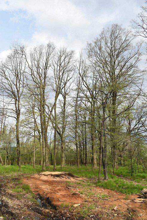 Místo v remízku u Krnova, kde stával mohutný dub.