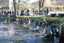 Výlov pivovarského rybníku v Hanušovicích v říjnu 2013.