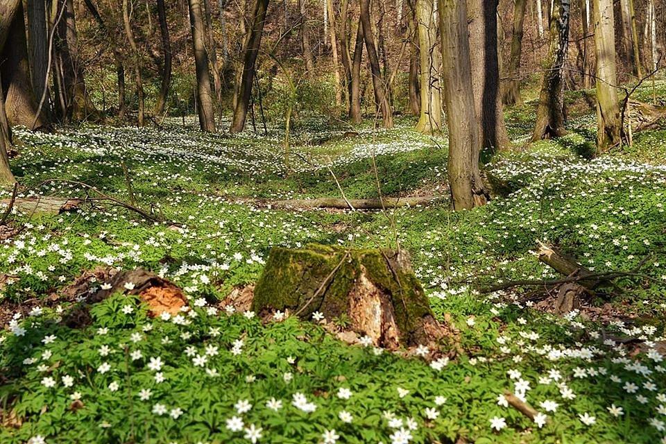 Jaro na Šumpersku a Jesenicku 2020