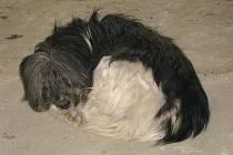 Zachráněný pes, který plul Lošticemi na ledové kře
