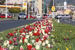 Rozkvetlý květinový záhon na Jesenické ulici v Šumperku.