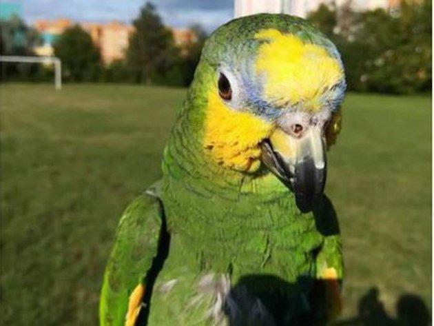 Uprchlý papoušek Arni