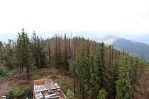 Odumírající les na Biskupské kupě.