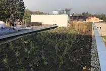 Slavnostní otevření zelené střechy v Mohelnici.