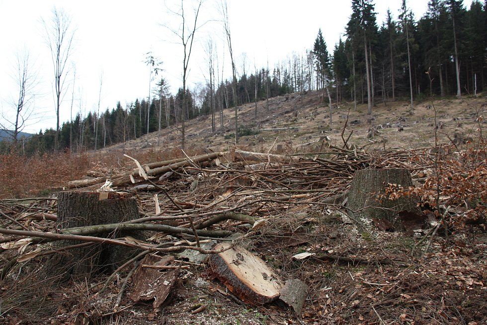 Následky kůrovcové kalamity - paseka u Dolního Údolí.