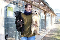 Psi odebraní majiteli v Kolšově v zábřežském útulku.