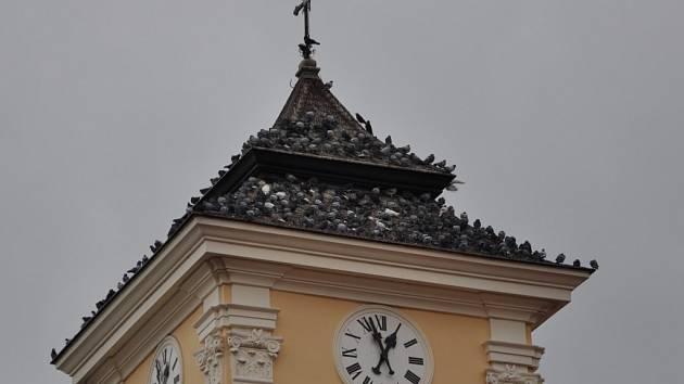 Holubi v centru Prostějova
