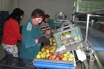Od listopadu tu mají v Dětkovicích také novou linku na třídění ovoce.