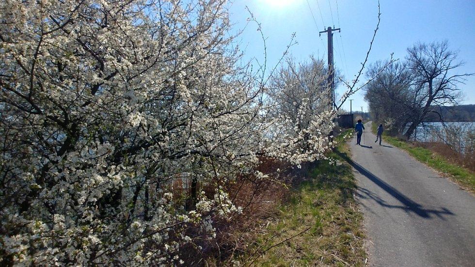 Jarní fotka z procházky ze Záhlinických rybníků, foceno dne 2.4.20