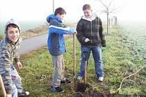 Sázení stromků v Nezamyslicích - Školáci v akci