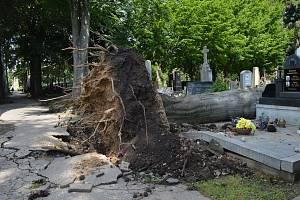 Bouřka zasáhla i prostějovský hřbitov. Popadané stromy zničily přes sedmdesát hrobů.