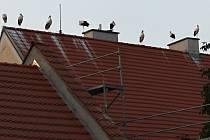 Čápi na střeše olšanské fary