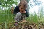 Houbaření na Prostějovsku v červenci 2020 - hřib dubový