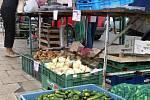 Okurková sezóna v prostějovské tržnici