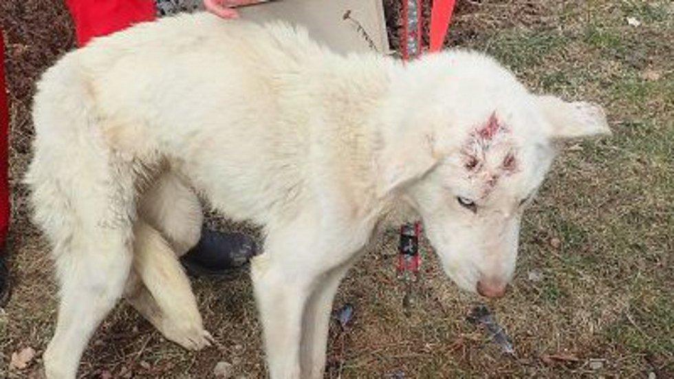 Psy našli v  domě v Ponikvi ve zbídačeném stavu