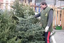 V Prostějově začal ve středu 26. listopadu před jedním ze supermarketů prodej vánočních stromků.
