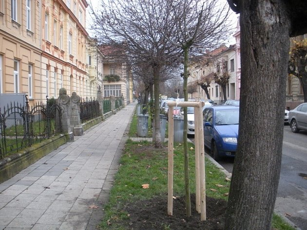Ve městě přibude čtyřicítka nových stromů a keřů