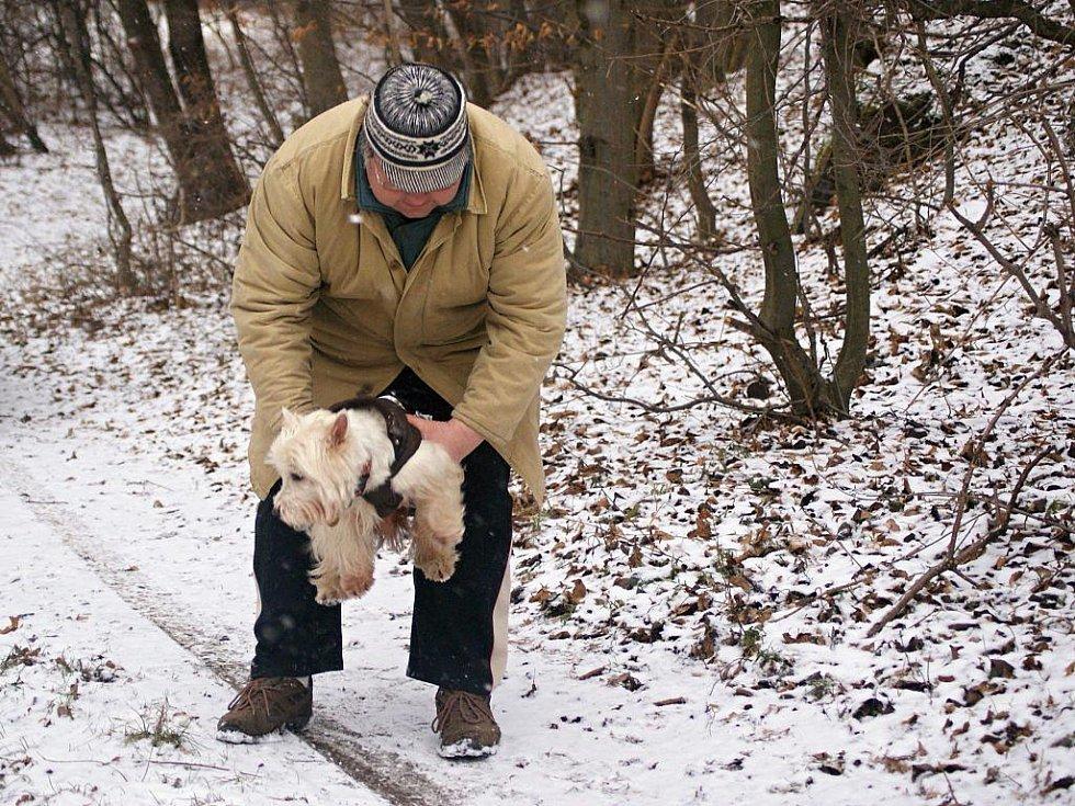Psi v oblečcích jsou k vidění na procházkách v zimě čím dál tím častěji