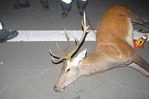 Na 14,5 kilometru dálnice D46 ve směru na Prostějov se lesní zvíře střetlo s dodávkou Mercedes-Benz.