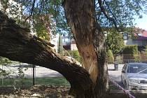 Stromy v zahradě mateřské školy byly nebezpečné dětem i dospělým. Jejich vykácení bylo nevyhnutelné.