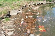 Dvě desítky mrtvých ryb posbírali rybáři z hladiny drozdovického rybníku. Současně odebrali i vzorek vody na rozbor.