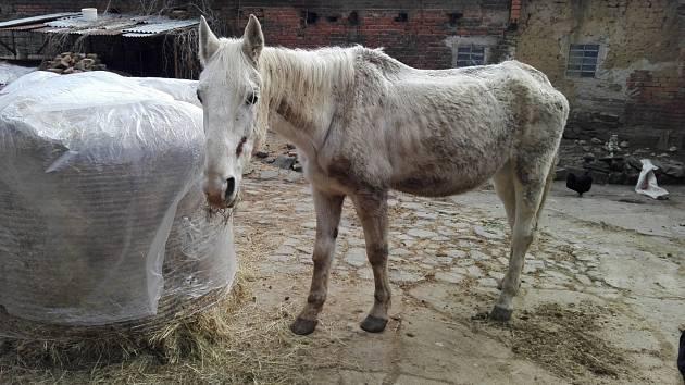 Majitelé z Hrušky se měli na koni dopouštět týrání. Hrozí jim pokuta.