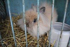 Chovatelé dodali na výstavu teddy králíků i drůbeže desítky a desítky zvířat.