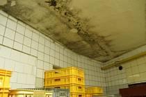 Závady v čelechovické pekárně Radim Metzner - plíseň na stropě