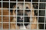 Na návštěvě v psím útulku Voříšek v Čechách pod Kosířem