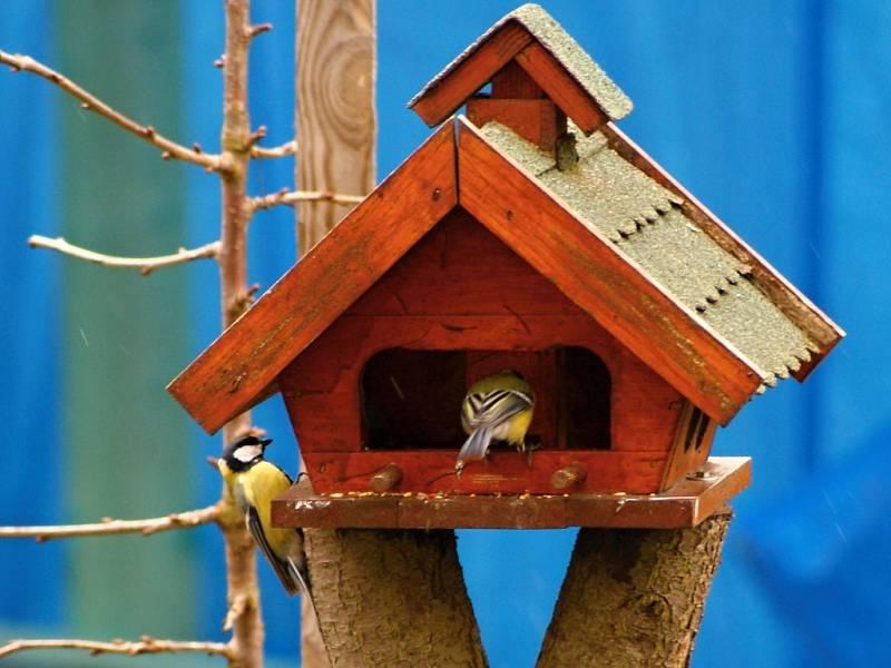 Slet ptačích strávníků u krmítka v Žárovicích