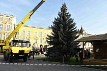 Větve z vánočního stromu Horáček poslouží kozám z čelechovické kozí farmy Rozinka