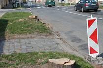 Rekonstrukce Plumlovské ulice si vyžádala oběť v podobě vykácení pěti letitých a zdravých lip.