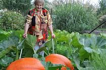 Osmdesátileté pěstitelce Marii Říhové z Brodku u Prostějova se na zahrádce urodily dýně jako hrom
