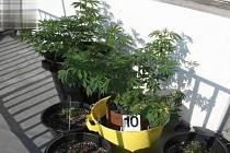Ve čtvrtek policisté obvinili muže za pěstování konopí. Podle policistů doma vypěstoval nejméně devět rostlin.