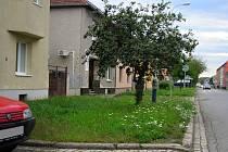 Výška nové trávy 15-20 cm ve Vrahovické ulici po již provedeném 4. sečení v červenci 2014
