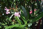 Molice. Drobný hmyz je téměř všude. Nejen, že ničí rostliny, ale obtěžuje obyvatele i při rekreaci na zahradě.