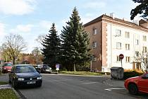 Vánoční strom 2019 roste v ulici Dr. Horáka v Prostějově