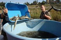 Závěrečný odlov ryb na Plumlovské přehradě