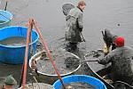 Výlov Podhradského rybníka v Plumlově - 2. listopadu 2019