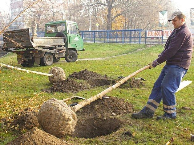 U nového mostu v Olomoucké vysázejí zahradníci zelené zákoutí.