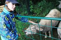 """Babi, já chci zajíčka!  Konice – Už jedenapadesátý ročník tradiční chovatelské výstavy domácího zvířectva a papoušků uspořádali v Konici. Na akci se sjeli nejen zapálení chovatelé s širokého okolí, ale potěšila i spoustu dětí.  """"Podívejte, jak kývá hlavou"""