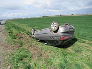 Řidiče u Čechůvek trápily srny. Jedna srážku nepřežila.