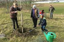Třicet stromů k uctění výročí sametové zasadili Smržičtí v sobotu 16. listopadu 2019.